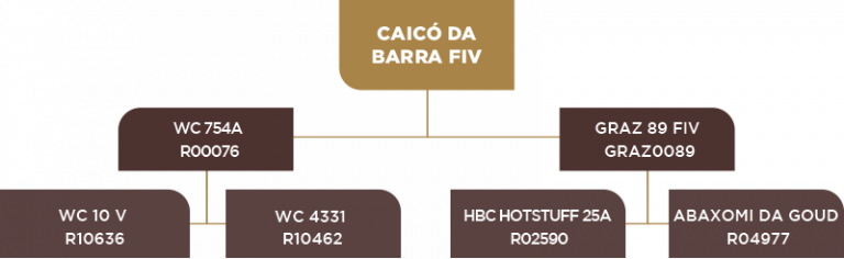 Genealogia Caicó da barra fiv