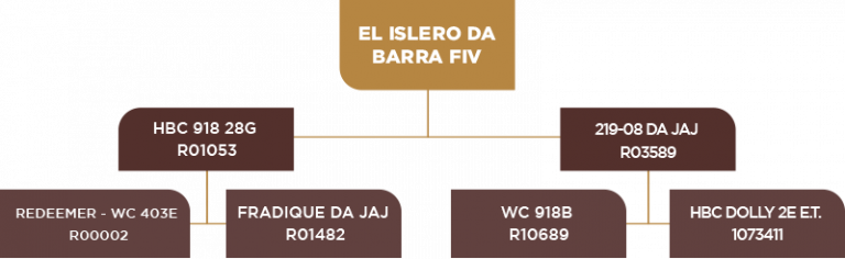 Genealogia El Islero da Barra Fiv