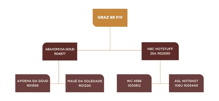 GENEALOGIA GRAZ 89 FIV