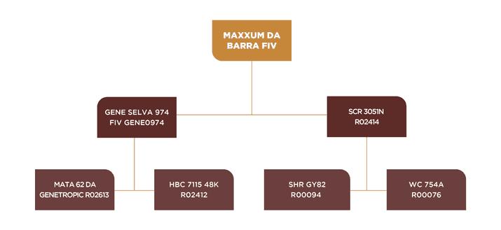 Genealogia Maxxum da barra fiv
