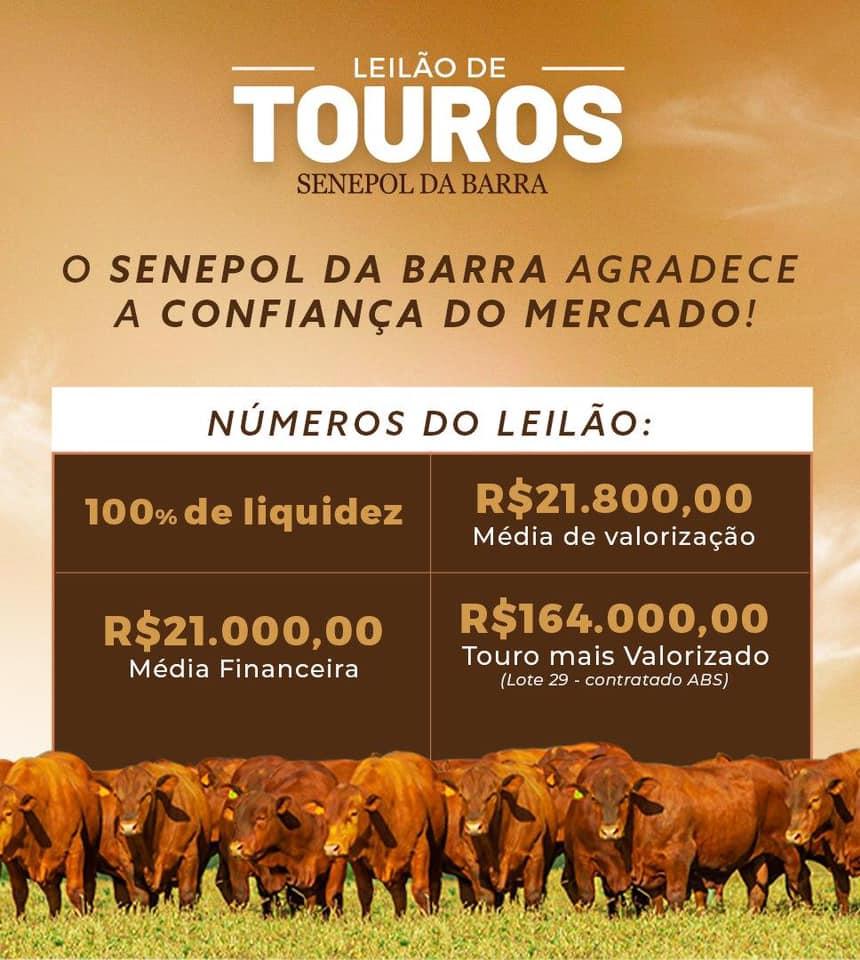 Leilão de Touros Senepol da Barra 2020