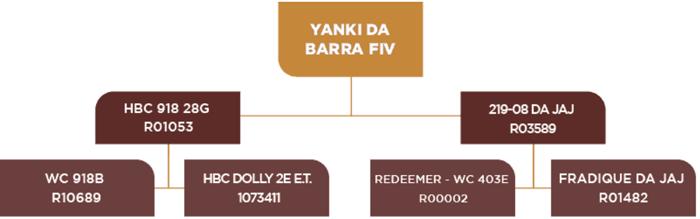 genealogia-yanki
