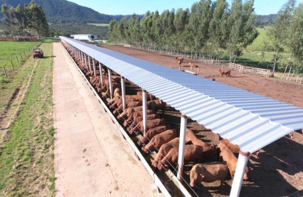 PIB agro no ramo pecuário