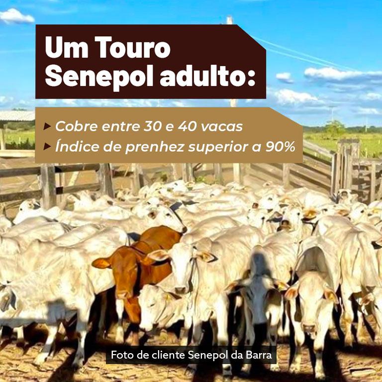 banner-leilao-2021-2-mobile3