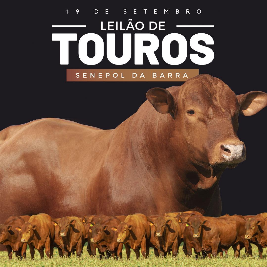 banner-leilao-2021-3-mobile2