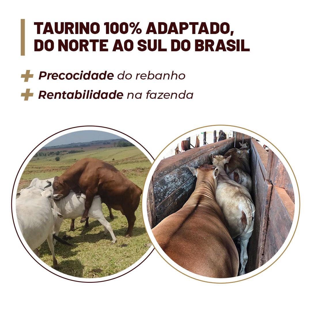 banner-leilao-2021-4-mobile