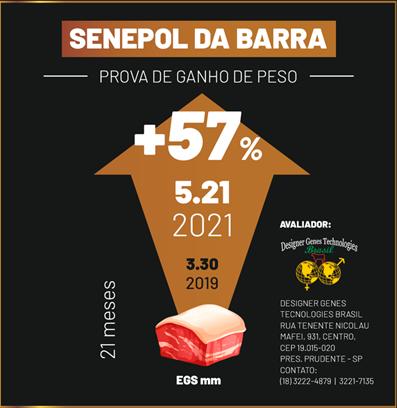 A geração 2021 incrementou 57% de EGS - Prova de Ganho de Peso Senepol da Barra